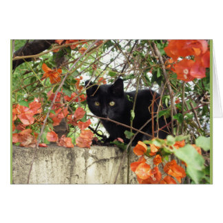 Black Kitten Peeking Through Orange Bougainvillea Card