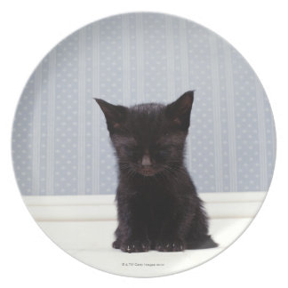 BLACK KITTEN SLEEPING PLATE