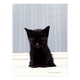 BLACK KITTEN SLEEPING POSTCARD