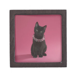 Black kitten wearing jeweled necklace premium jewelry boxes