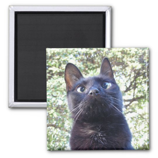 Black Kitty Cat Square Magnet
