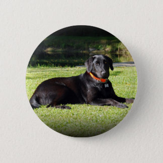 Black Lab 6 Cm Round Badge