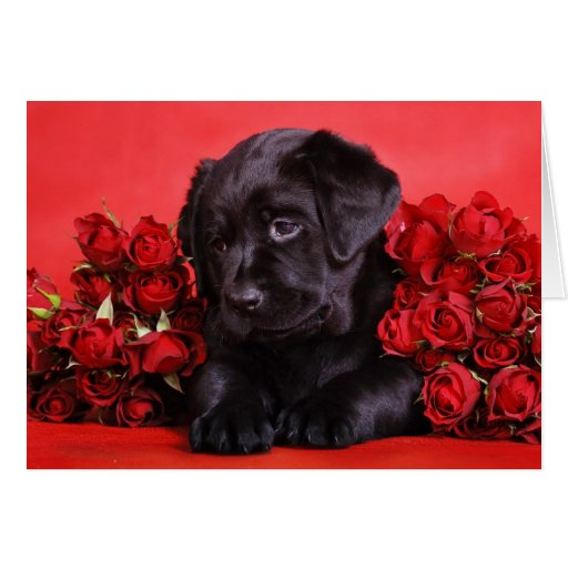 Black Lab and roses Greeting Card