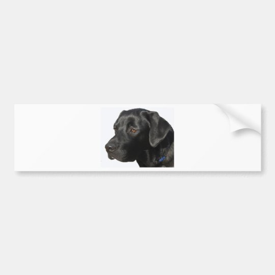Black Lab Beauty Bumper Sticker