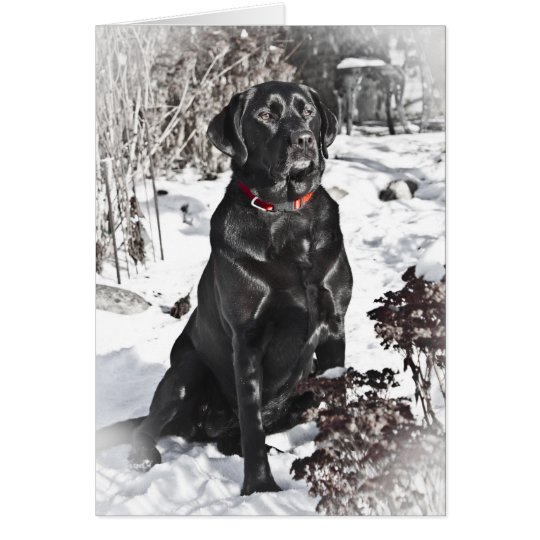 Black Lab, Blank Card