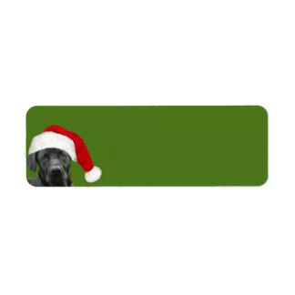 Black lab Christmas