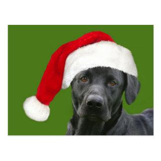 Black lab Christmas Postcard