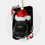 Black lab dog nose with santa hat photograph christmas ornaments