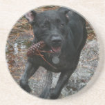 Black Lab Dog with Pinecone running Coasters