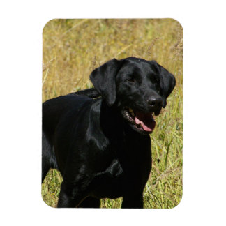 Black Lab in Field Flexible Magnet