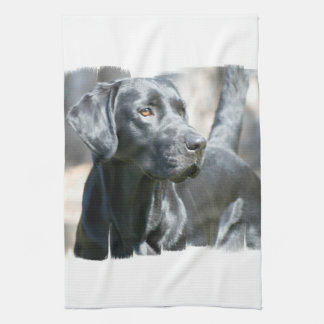 Black Lab  Kitchen Towel