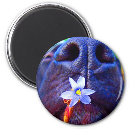 Black lab mix nose, small purple flower picture 6 cm round magnet