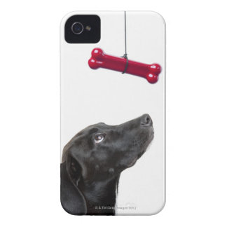 Black lab mixed dog with red dog bone Case-Mate iPhone 4 case
