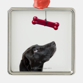 Black lab mixed dog with red dog bone christmas ornament