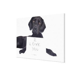 Black Labrador 13 Months Canvas Print