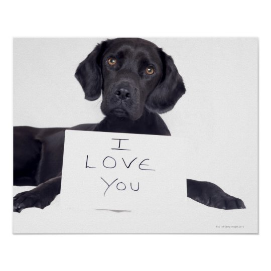 Black Labrador 13 Months Poster