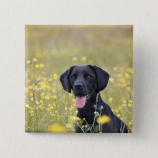 Black labrador 16 Months 15 Cm Square Badge