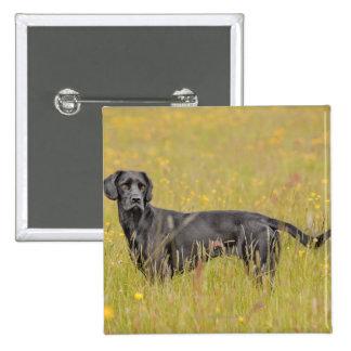 Black labrador 16 Months 2 15 Cm Square Badge
