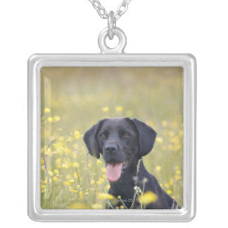 Black labrador 16 Months Silver Plated Necklace