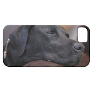 Black labrador asleep on sofa, close-up barely there iPhone 5 case
