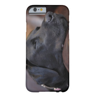 Black labrador asleep on sofa, close-up barely there iPhone 6 case