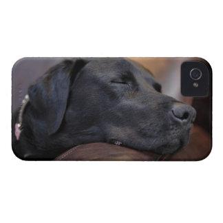 Black labrador asleep on sofa, close-up iPhone 4 case