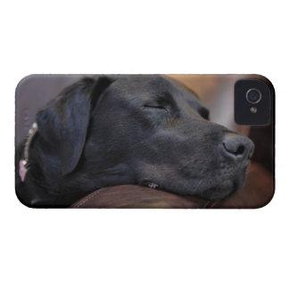 Black labrador asleep on sofa, close-up iPhone 4 cases