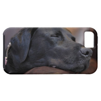Black labrador asleep on sofa, close-up iPhone 5 cover