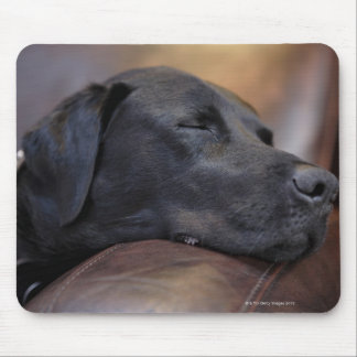 Black labrador asleep on sofa, close-up mouse mat