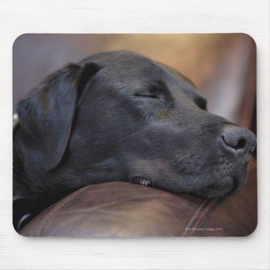 Black labrador asleep on sofa, close-up mouse mat