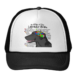 Black Labrador Brain Atlas Cap