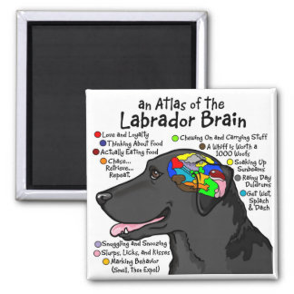 Black Labrador Brain Atlas Square Magnet