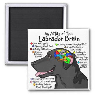 Black Labrador Brain Atlas Square Magnet