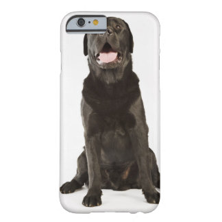 Black Labrador (Canis familiaris), panting, Barely There iPhone 6 Case