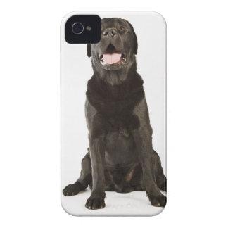 Black Labrador (Canis familiaris), panting, Case-Mate iPhone 4 Case