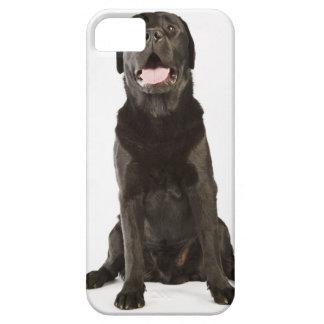 Black Labrador (Canis familiaris), panting, iPhone 5 Cases