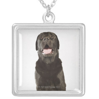 Black Labrador (Canis familiaris), panting, Silver Plated Necklace