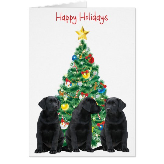 Funny Cat Christmas Cards & Invitations
