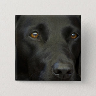 Black Labrador Dog 15 Cm Square Badge