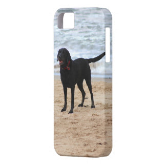 Black Labrador Dog Case For The iPhone 5