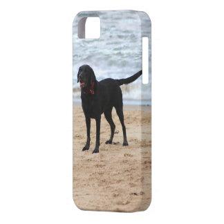 Black Labrador Dog Case For The iPhone 5