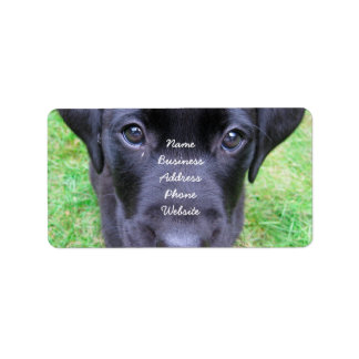 Black Labrador Dog on Grass Address Label