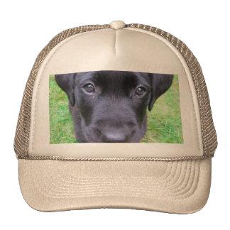 Black Labrador Dog on Grass Trucker Hat