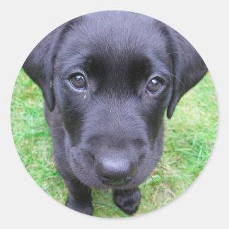 Black Labrador Dog on Grass Classic Round Sticker