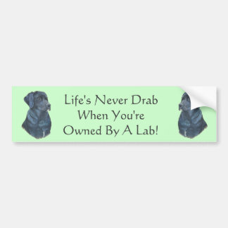 black labrador dog portrait original fun slogan bumper sticker
