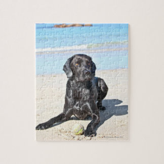 Black Labrador Dog sitting on the Beach Jigsaw Puzzle
