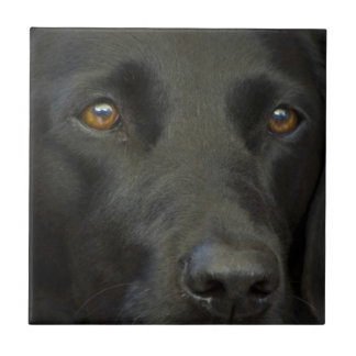 Black Labrador Dog Small Square Tile