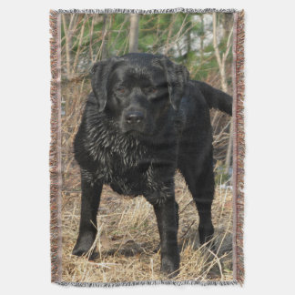 Black Labrador - Early Spring Hunt