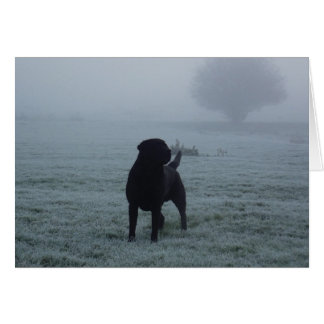 Black Labrador In The Early Morning Frosty Mist Greeting Cards