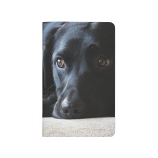 Black Labrador Journal